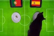 Clip: Tiên tri mèo Cass dự đoán kết quả Bồ Đào Nha vs Tây Ban Nha