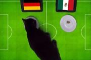 Clip: 'Tiên tri' mèo Cass dự đoán kết quả trận Đức vs Mexico