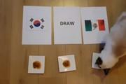 Dự đoán World Cup:Đại bàng, hamster, mèo chọn Mexico thắng Hàn Quốc