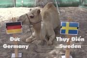 Clip dự đoán World Cup: Lạc đà, vẹt, mèo chọn Đức thắng Thụy Điển
