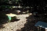 Phú Thọ: Xã ra yêu cầu lạ lùng đòi di dời đàn ong vì… hại hoa màu