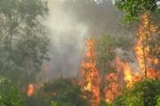 2 ngày 8 vụ cháy rừng, Bộ trưởng Bộ NN&PTNT ra công điện khẩn