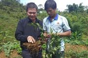 Vùng đất dân đổi đời nhờ trồng bạt ngàn các loài sâm quý