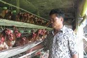 Dựng cơ nghiệp từ... gà, thu bạc tỷ mỗi năm