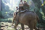 Thái Lan: Quật chết quản tượng, voi cõng du khách vào rừng