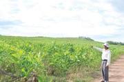 Biến đất cằn thành trang trại kinh tế tiền tỷ