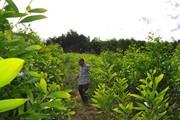 Nông thôn đổi mới, nông dân đổi đời