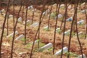 Tài tình chế hệ thống tưới nhỏ giọt từ chai nhựa bỏ đi