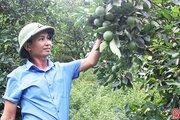 Đồng lòng, vợ chồng trẻ thu trên 1 tỷ/năm từ trang trại đủ loại quả