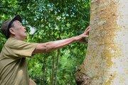 Ông chủ sở hữu rừng gỗ quý trăm tuổi hàng chục tỷ đồng quyết không bán