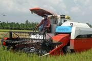 Bi kịch của người trồng lúa:  Càng làm… càng nghèo