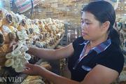 """Từ """"phận"""" làm thuê, gái đảm xứ Lạng thành bà chủ trại nấm """"khủng"""""""