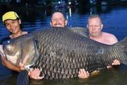 Câu được cá chép khổng lồ nhất thế giới, nặng 105kg ở Thái Lan
