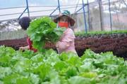 Hà Nội: Tìm giải pháp tiêu thụ nông, lâm, thủy sản an toàn