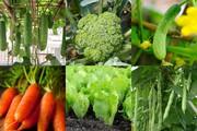 """6 loại rau củ sẽ """"lớn nhanh như thổi"""" nếu trồng trong tháng 8 này"""