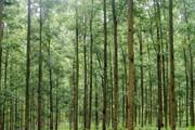Giám đốc và trưởng phòng lấy đất rừng phòng hộ trồng rừng cho mình