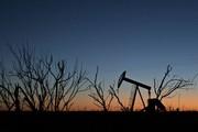"""Mua mảnh đất rẻ như cho không ngờ đang ngồi trên """"mỏ vàng"""" trong lòng đất"""