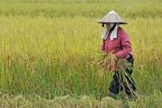 Tự ý chuyển mục đích sử dụng đất nông nghiệp: Phạt tới 50 triệu đồng