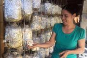 Vươn lên làm giàu từ trang trại trồng nấm