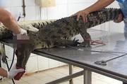 Cảnh lột da cá sấu ở trang trại Việt Nam lên báo Tây