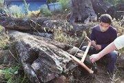 TQ: Miếng gỗ xấu vứt chỏng chơ hóa ra là vật báu 69 tỷ đồng