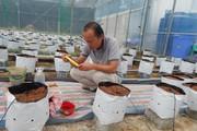 Đam mê, chàng trai Huế bỏ việc, làm nhà kính siêu hiện đại trồng rau