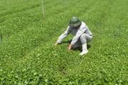 Diễn đàn Nông nghiệp hữu cơ: Nhu cầu dùng thực phẩm hữu cơ rất lớn