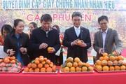 Những vườn cây giúp nông dân hái ra tiền tỷ trên đất Mường Sơn La