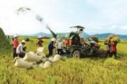 Dư nợ cho vay nông nghiệp, nông thôn chiếm gần 24% dư nợ tín dụng nền kinh tế