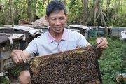 Triệu phú vươn lên từ nghèo khó nhờ nuôi ong, làm mật ngon