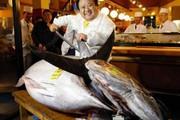 Điều gì đặc biệt khiến con cá này được bán với giá 42 tỷ đồng?