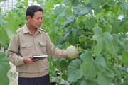 Đến thăm trang trại trồng dưa, nuôi lợn, cá ở Hà Tĩnh thu 5 tỷ