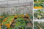 Mê hoặc với vườn rau trồng trong thùng xốp, tươi ngon nõn nà mà chi phí thấp