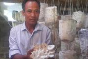 """Ninh Bình: Trồng 100.000 bịch phôi nấm, U60 """"hái"""" 40 triệu/tháng"""