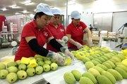 Làm thế nào để nông sản Việt tận dụng các FTA, ra thị trường thế giới?