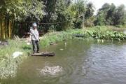 Cả làng khá giả nhờ nuôi cá nước ngọt