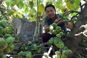 Những sản phẩm được ưa chuộng làm từ trái vả xứ Huế