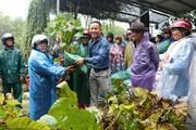 Tặng 5.000 cây vả giống và bao tiêu trái vả cho nông dân