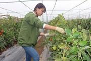 Quỹ Hỗ trợ nông dân giúp nuôi gà khỏe, trồng rau công nghệ cao
