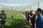 Cán bộ khuyến nông học trồng rau VietGAP