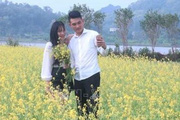 Hay: Gieo cả 1 bãi hoa cải ven sông, kéo khách ra đồng chụp ảnh