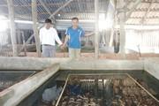 """Sóc Trăng: Nuôi 30.000 con lươn trong bể không bùn cho lời """"khủng"""""""