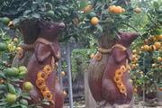 """Độc đáo chuột """"cõng"""" quất bonsai tiền triệu hút khách dịp giáp Tết"""