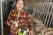 Ninh Bình: Tiền tích cóp cả đời dạy học đặt vào 'canh bạc' trồng nấm