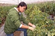 Hội vận động, nông dân hăng hái xây dựng NTM