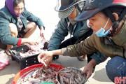 Hà Tĩnh: Ra biển kéo trúng loài tôm bạc, bán 400 ngàn đồng/kg