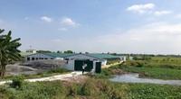 Hải Phòng: 8 trại lợn thi nhau xả thải, kênh tưới tiêu đặc kín phân lợn