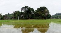 Khổng Tào - ngôi làng gần 700 năm và 2 vị thành hoàng