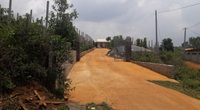 Đề nghị công an điều tra, xử lý nguyên Phó Chủ tịch thành phố hợp thức hóa đất rừng cho cán bộ