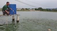 Ninh Bình: Biến ruộng bỏ hoang thành ao nổi nuôi cá dày đặc, con nào cũng to đẫy đà, ông nông dân thành tỷ phú
